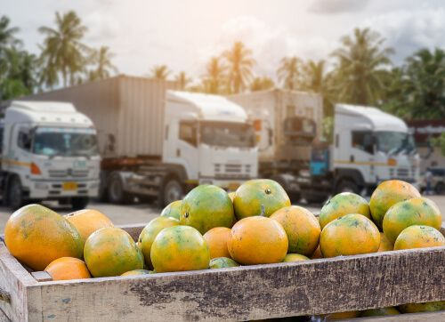 How to Start a Fruit Export Business?