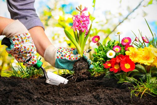 How to Start a Gardening Startup? Investments, Plan, Steps & More