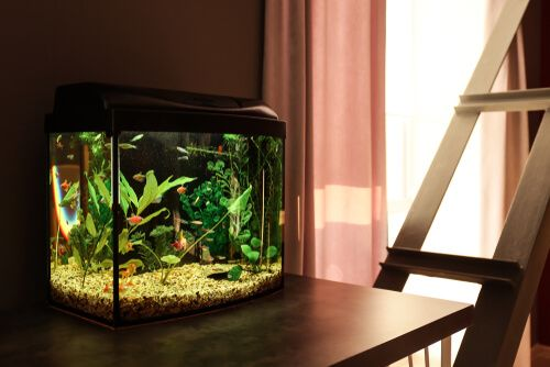 How to Open an Aquarium Store? Investments, Steps & More